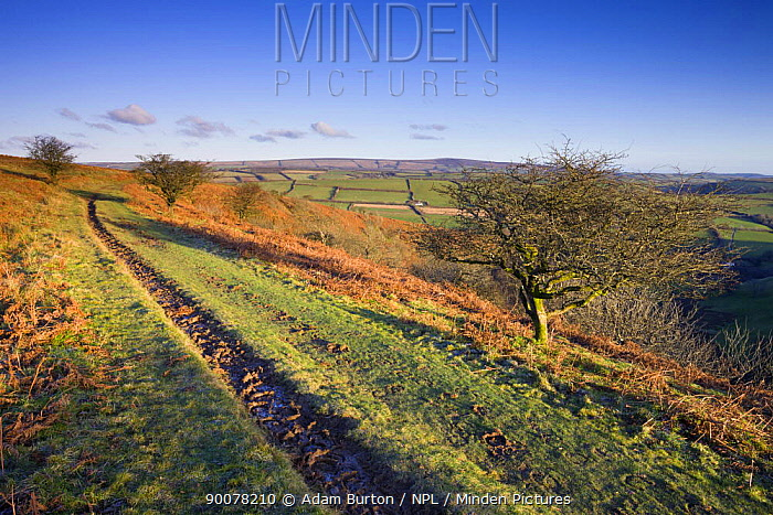 Bridleway on Winsford Hill, Exmoor National Park, Somerset, England  -  Adam Burton/ npl