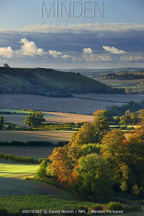 Countryside at dawn with autumn colours near Cerne Abbas, Dorset, England, UK, October 2008  -  David Noton/ npl