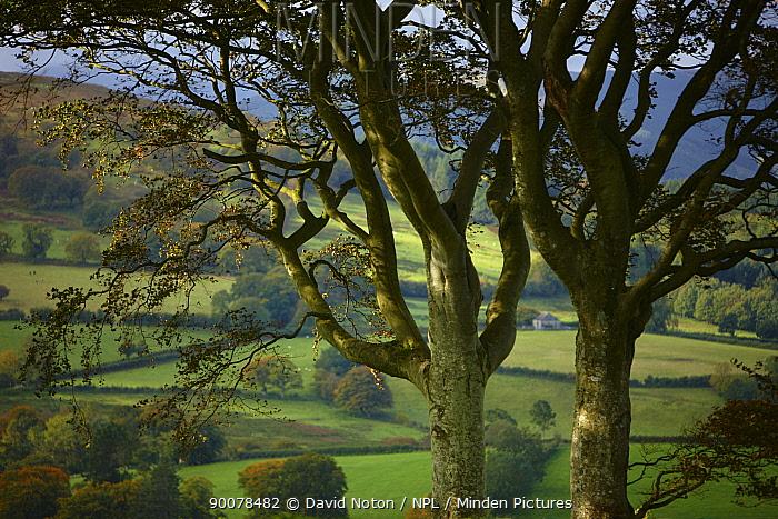 Autumn colours near Capel Garmon, Snowdonia National Park, Gwynedd, North Wales, UK, October 2008  -  David Noton/ npl