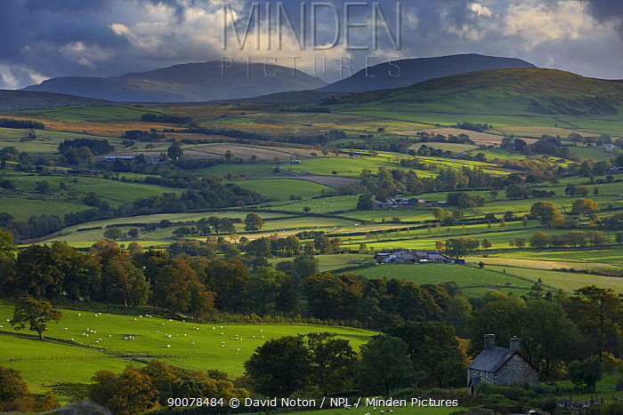 Rolling farmland on the edge of Snowdonia National Park, nr Ysbyty Ifan, County Conwy, North Wales, UK, October 2008  -  David Noton/ npl
