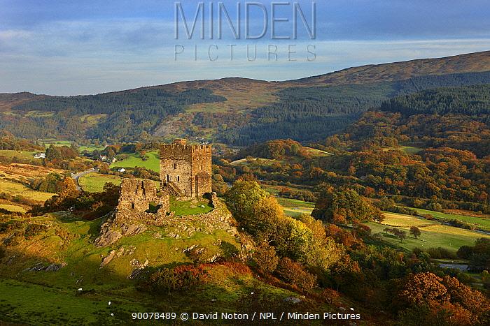 Dolwyddelan Castle, Dolwyddelan, nr Betws y Coed, Snowdonia National Park, Conwy, North Wales, UK, October 2008  -  David Noton/ npl