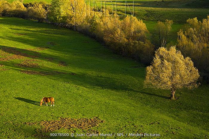 Looking down on horse grazing in mountain valley, autumn, Casasuertes, Picos de Europa NP, Leon, Northern Spain October 2006  -  Juan Carlos Munoz/ npl