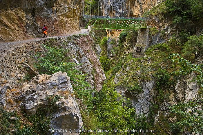 Hiker on the Ruta del Cares path, Pico de Europa NP, Leon, Northern Spain October 2006  -  Juan Carlos Munoz/ npl