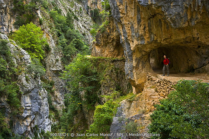 Hiker on the Ruta del Cares path where it is cut into the mountainside, Pico de Europa NP, Leon, Northern Spain October 2006  -  Juan Carlos Munoz/ npl
