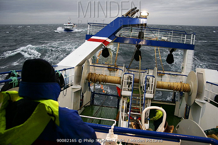 Aboard Ocean Harvest 40-50 miles East of Newcastle on the Barnacle Bank Harvester is manoeuvring alongside to receive his side of the net at the start of a pair trawl operation, October 2008  -  Philip Stephen/ npl
