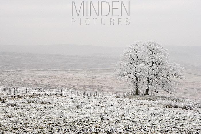 Hoar frost covering landscape, Peak District, UK, New years day 2009  -  Paul Hobson/ npl