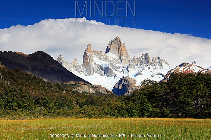 Cerro Fitz Roy with clouds behind, seen across reed-filled lake, Los Glaciares National Park, Argentina February 2009  -  Michael Hutchinson/ npl