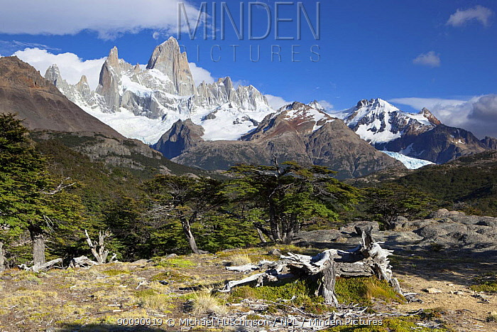 Cerro Fitz Roy, Los Glaciares National Park, Argentina February 2009  -  Michael Hutchinson/ npl
