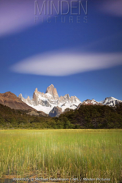 Cerro Fitz Roy and reed-filled lake, Los Glaciares National Park, Argentina February 2009  -  Michael Hutchinson/ npl