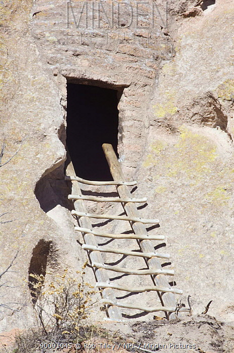 Ladder leading to cliff dwelling of the ancient native american Pueblo people, Bandelier National Monument, New Mexico, USA, February 2009  -  Rob Tilley/ npl