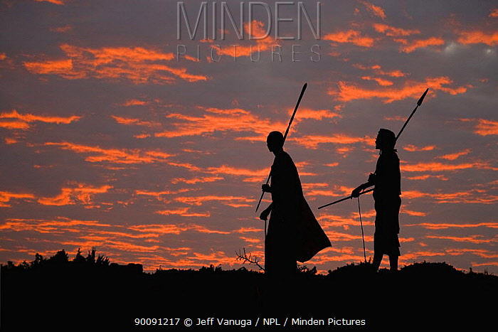 Young Masai warriors with spears silhouetted against an African Sunset, Kenya September 2006  -  Jeff Vanuga/ npl