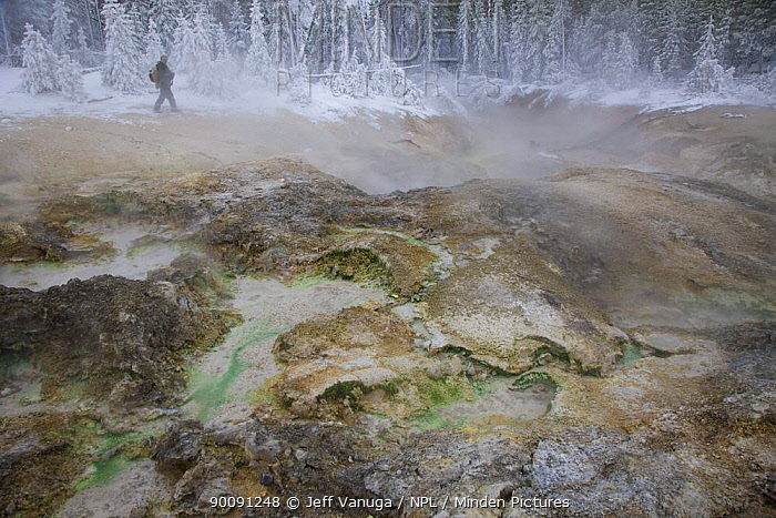 Steve Fuller photographing in the West Nymph Lake Creek Geyser area, Yellowstone National Park, Wyoming, USA, October 2008  -  Jeff Vanuga/ npl