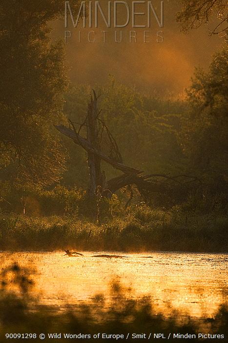 Swamp at dawn in front of a dyke, Gornje Podunavlje Special Nature Reserve, Serbia, June 2009  -  WWE/ Smit/ npl