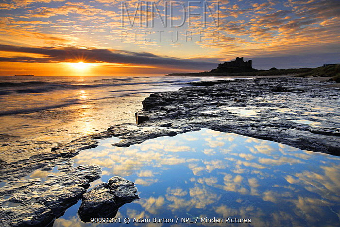 Sunrise on coast near Bamburgh Castle, Northumberland, England  -  Adam Burton/ npl
