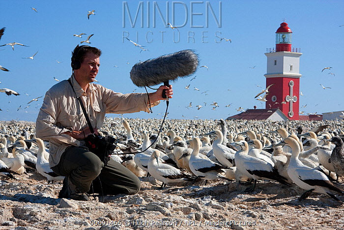 BBC Producer, Hugh Pearson, recording the sound of Cape gannets (Morus capensis) Bird Island, off the coast of the Eastern Cape, South Africa, January 2008  -  Hugh Pearson/ npl