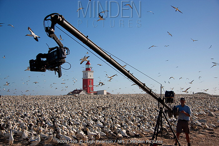 BBC camera crew filming Cape gannet (Morus capensis) colony using a Jimmy Jib, Bird Island, off the coast of the Eastern Cape, South Africa, January 2008  -  Hugh Pearson/ npl