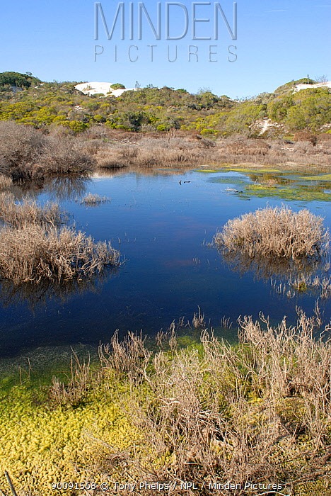 Freshwater pan in dunes, Dehoop Nature Reserve, Western Cape, South Africa  -  Tony Phelps/ npl