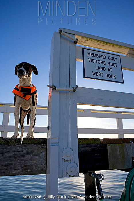 Millie the dog wearing lifejacket on pontoon, next to a sign that reads Members only Visitors must land at West Dock  -  Billy Black/ npl