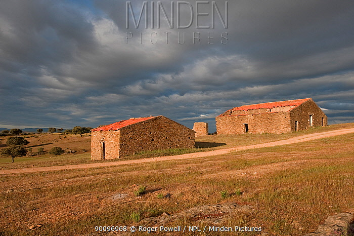 Ruined barns with a thunderstorm approaching, nesting habitat of Hoopoes and Spotless starlings, Castelo Branco, Portugal  -  Roger Powell/ npl