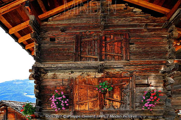 Traditional wooden granary, raccard decorated with geraniums in the Alpine village Grimentz, Valais, Switzerland, July 2009  -  Philippe Clement/ npl