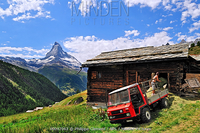 Farmer storing hay in traditional wooden granary, raccard near Findeln, the Matterhorn in the distance, Valais, Switzerland, July 2009  -  Philippe Clement/ npl