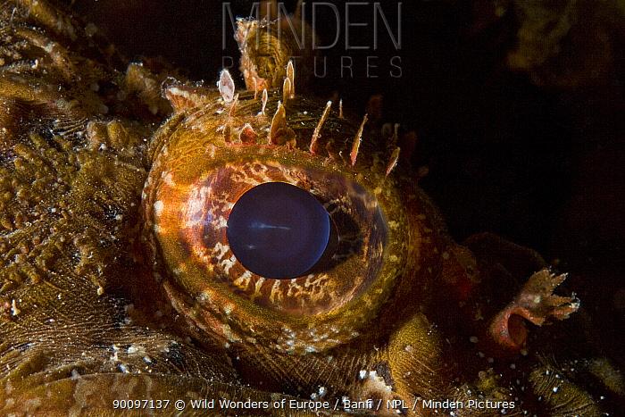 Scorpionfish (Scorpaena porcus) close-up of eye, Larvotto Marine Reserve, Monaco, Mediterranean Sea, July 2009  -  WWE/ Banfi/ npl