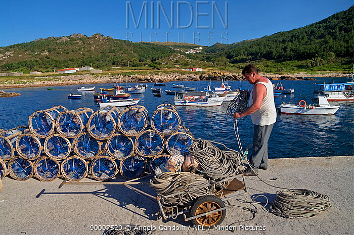 Man with octopus traps in the small harbour of Camelle, Galicia, Spain July 2008  -  Angelo Gandolfi/ npl
