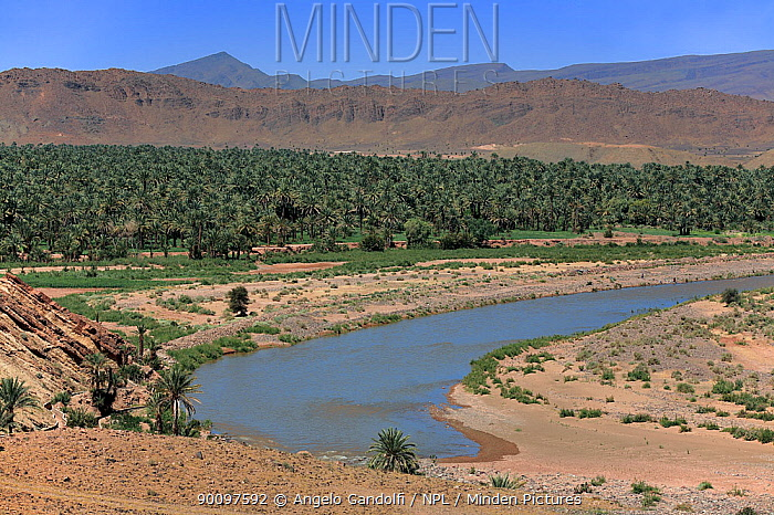 Draa Valley landscape with date palm (Phoenix dactylifera) plantation The river Draa seeps into the sand of the Sahara desert and disappears Morocco, March 2007  -  Angelo Gandolfi/ npl