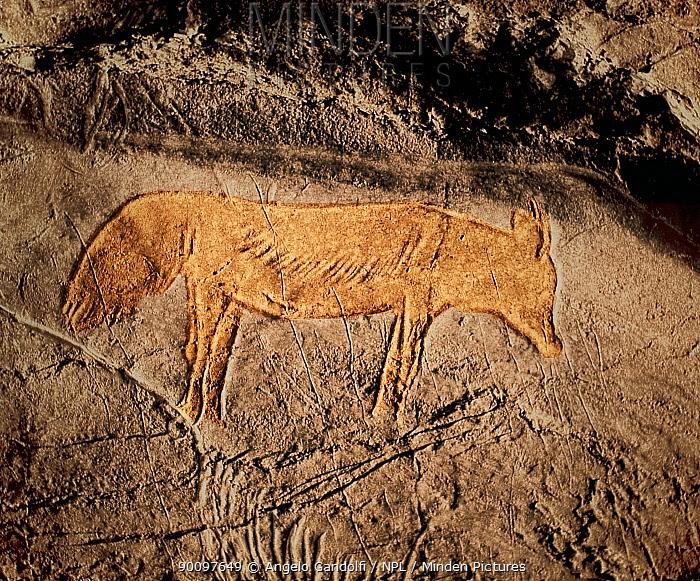 Prehistoric rock painting of a fox (Vulpes vulpes), Albxerri cave, Pais Vasco, Spain July 2008  -  Angelo Gandolfi/ npl
