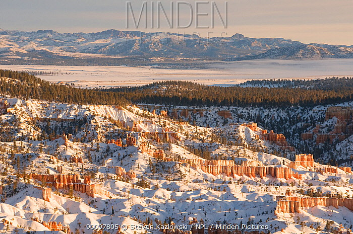 Winter in Bryce Canyon National Park, southern Utah, USA February 2009  -  Steven Kazlowski/ npl