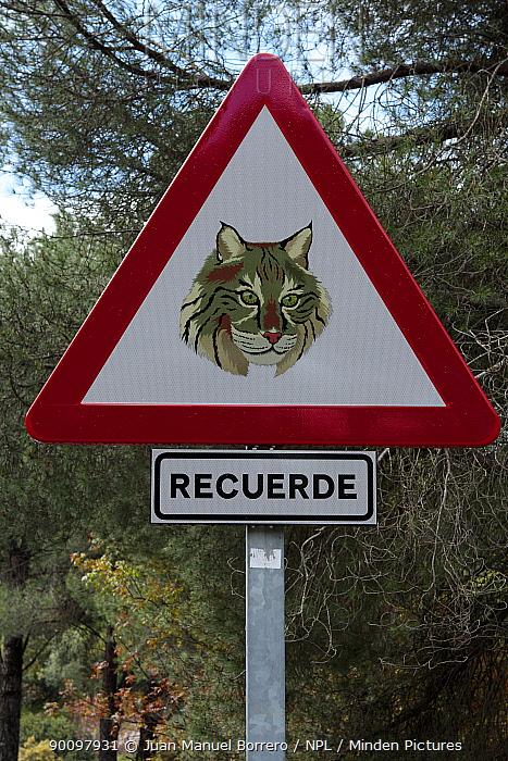Road traffic warning sign for the conservation of Spanish lynx (Lynx pardina) Sierra de Andujar Natural Park, Jaen, Spain 2009  -  Juan Manuel Borrero/ npl
