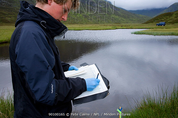 Researcher records field notes on Upland water vole (Arvicola terrestris) as part of Cairngorms Water Vole Conservation Project, Scotland, UK, July 2008  -  Pete Cairns/ npl