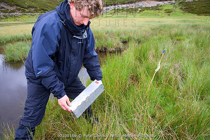 Researcher sets up trap for Upland water vole (Arvicola terrestris) as part of Cairngorms Water Vole Conservation Project, Scotland, UK, July 2008  -  Pete Cairns/ npl