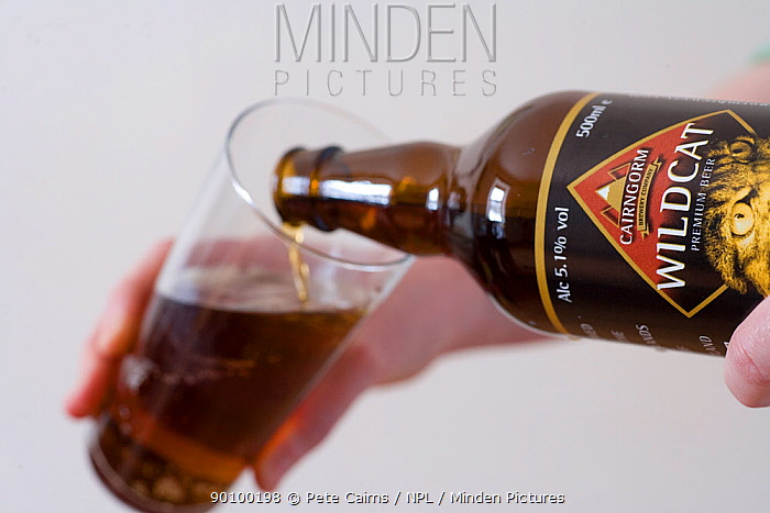 Wildcat beer being poured into glass, Cairngorms, Scotland, UK  -  Pete Cairns/ npl