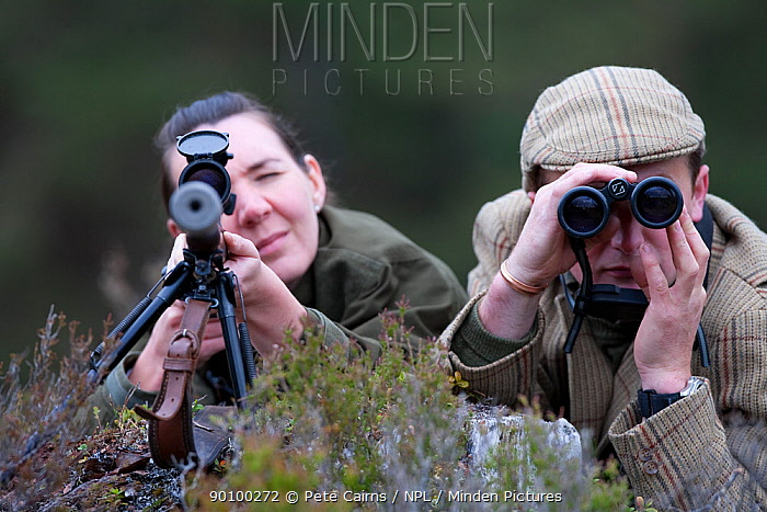 Deer stalker using binoculars to spot deer for guest looking down telescopic sight of gun, Glenfeshie, Cairngorms, Scotland, UK, June 2008, model release  -  Pete Cairns/ npl