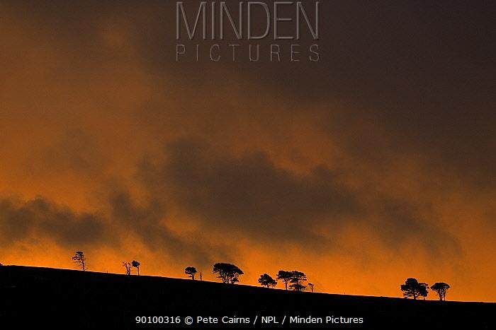 Sunrise over remnants of pine forest, Cairngorms National Park, Scotland, December 2007  -  Pete Cairns/ npl