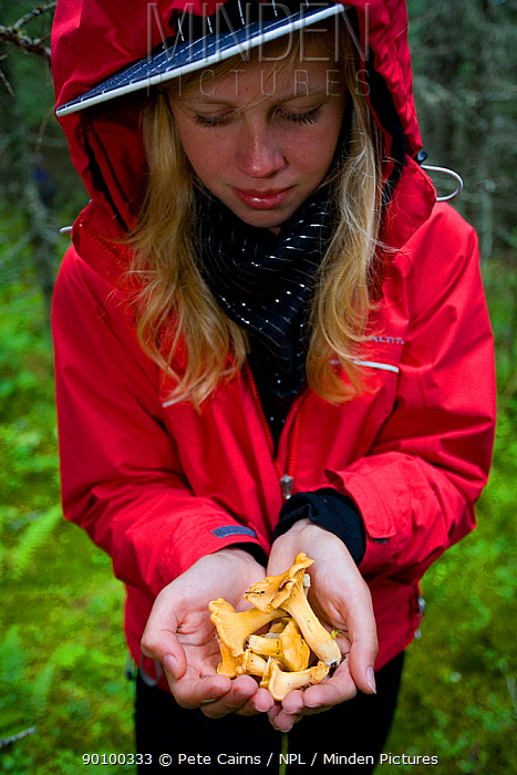 Woman holding chanterelle mushrooms in the forest, Norway, July 2007, model released  -  Pete Cairns/ npl