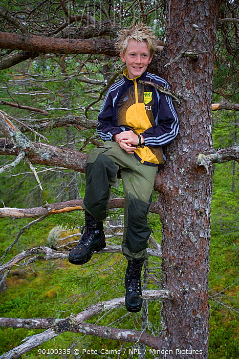 Young boy playing in forest, climbing a tree, Norway, model released, July 2007  -  Pete Cairns/ npl