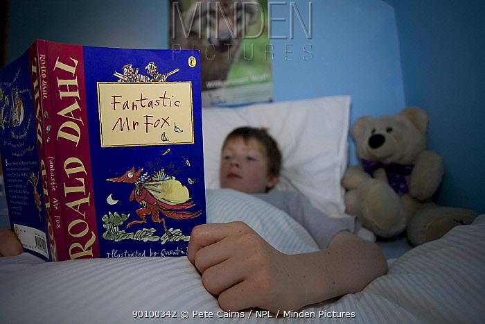 Boy reading 'Fantastic Mr Fox' book in bed, Scotland, UK, model release  -  Pete Cairns/ npl
