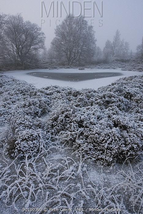 Frozen wetland pool, Abernethy, Cairngorms National Park, Scotland, UK, in winter, January 2009  -  Pete Cairns/ npl