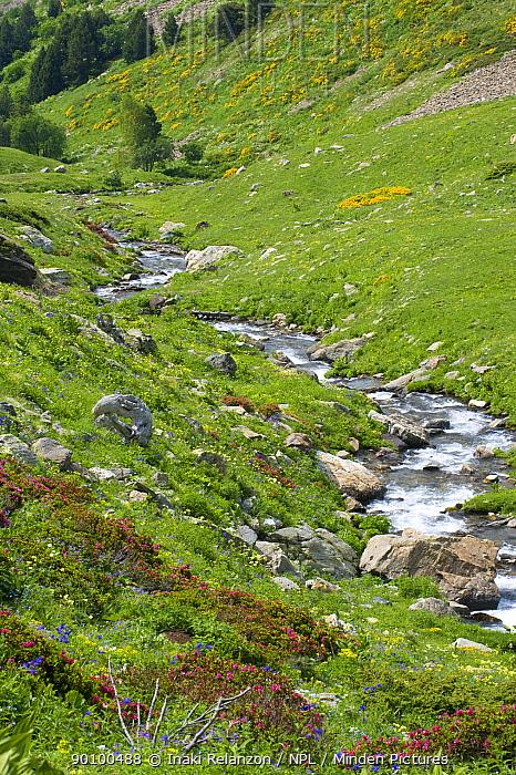 Vallee d' Eyne Reserve Naturel, Haute Cerdagne, Pyrenees Orientales, Languedoc Roussillon, France July 2008  -  Inaki Relanzon/ npl