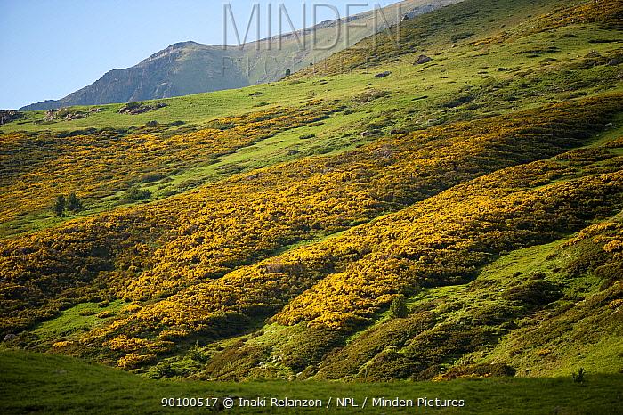 Vallee d' Eyne Reserve Naturel, Haute Cerdagne, Pyrenees Orientales, Languedoc Roussillon, France June 2009  -  Inaki Relanzon/ npl