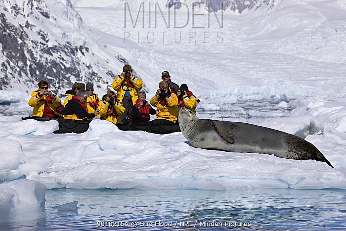 Tourists photographing Leopard seal (Hydrurga leptonyx) on ice floe, Andvord Bay, Antarctic peninsula, November 2008  -  Sue Flood/ npl