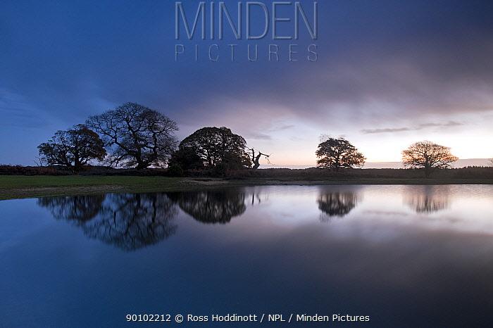 Reflections of trees in pond near Mogshade Hill, New Forest, Hampshire, UK November 2009  -  Ross Hoddinott/ npl