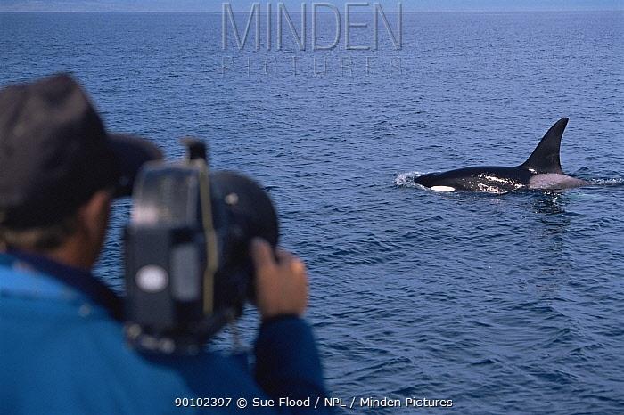 Cameraman Doug Allan, filming Killer whale (Orcinus orca) surfacing, for BBC, Alaska, USA  -  Sue Flood/ npl