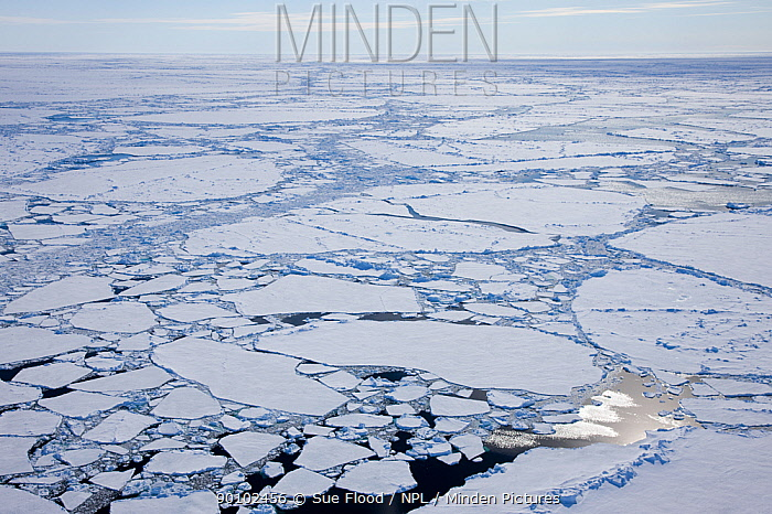 Aerial view of broken ice on route to the North Pole, Russian Arctic, July 2008  -  Sue Flood/ npl
