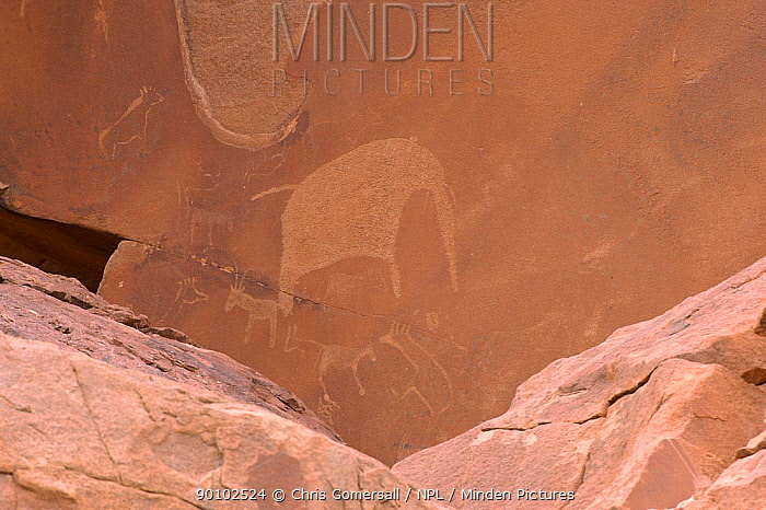 Ancient rock carvings of animals including elephant in red sandstone, Twyfelfontein, Damaraland, Namibia  -  Chris Gomersall/ npl