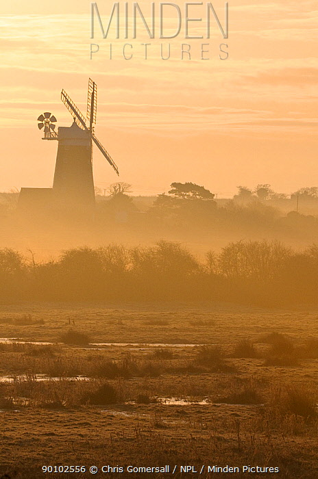 Grazing marshes at Holkham National Nature Reserve looking towards Burnham Overy mill at dawn, Norfolk, UK, March 2009  -  Chris Gomersall/ npl