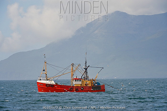 Inshore fishing boat trawling for Langoustines, Norway lobsters near Eigg, Small Isles, Hebrides, Scotland, June 2008  -  Chris Gomersall/ npl