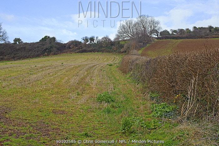 Farmland and winter stubble, typical Cirl bunting habitat, South Devon, UK, January 2009  -  Chris Gomersall/ npl